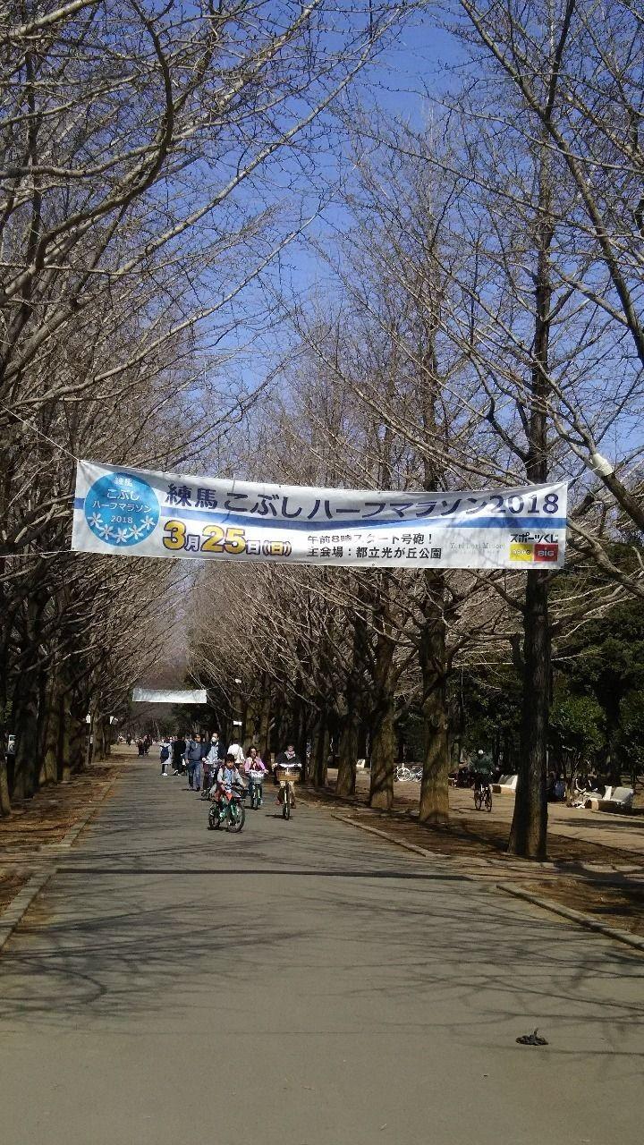 練馬こぶしハーフマラソン2019が3月24日(日)に開催されます!会場である光が丘公園をスタートし、笹目通り・目白通り・環八通り・川越街道と普段人は走ることのない幹線道路を春の日差しを浴びながらランナーが走り抜け再び光が丘公園に戻ってきます。5000人のランナーが練馬区内を駆け抜けます。こぶしは「練馬区の木」で「友情」「歓迎」という花言葉を持つことから「練馬こぶしマラソン」の名称がつけられたそうです。