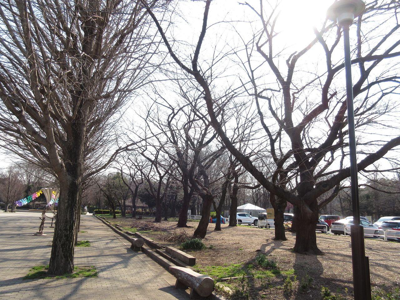 赤塚公園のお花見スポット