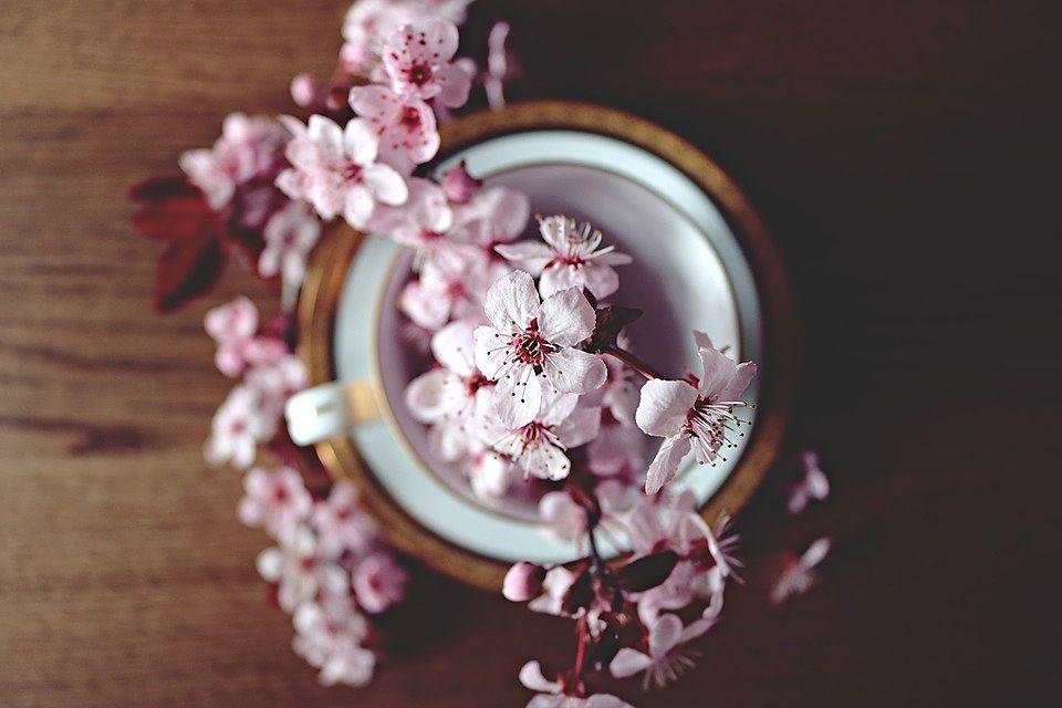 高島平のお花見スポット!
