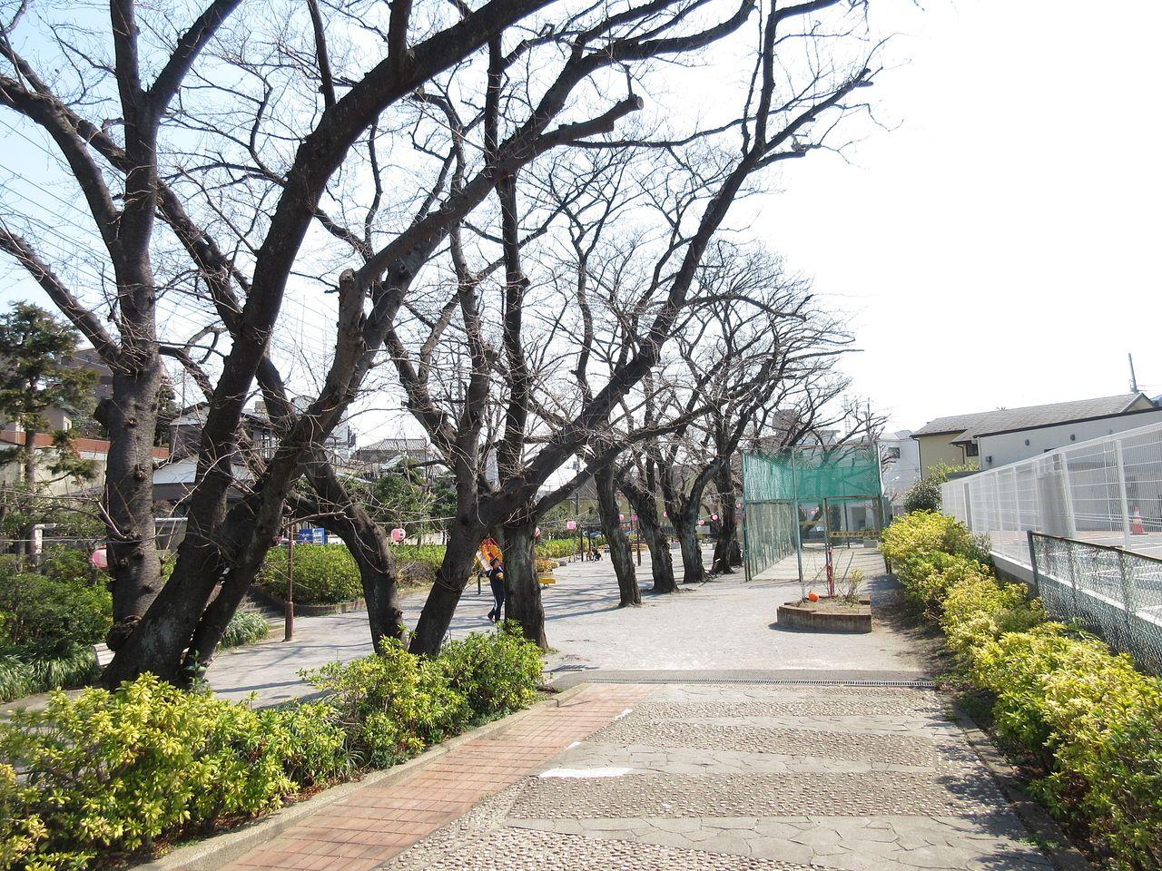 石川橋公園のお花見スポット