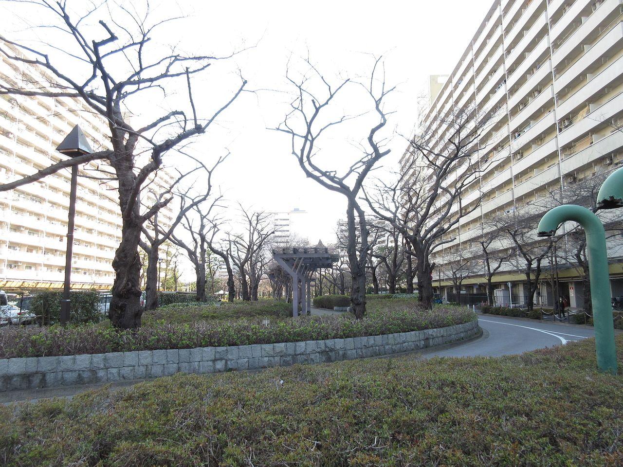 前谷津川緑道のお花見スポット