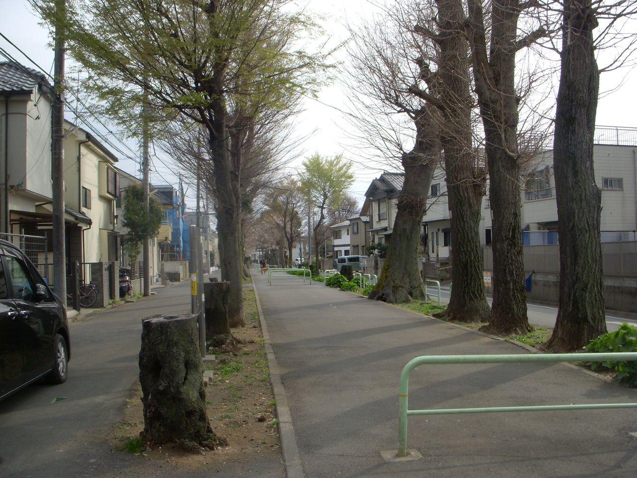参道 参道沿いに残る並木は板橋区の天然記念物に登録されています。