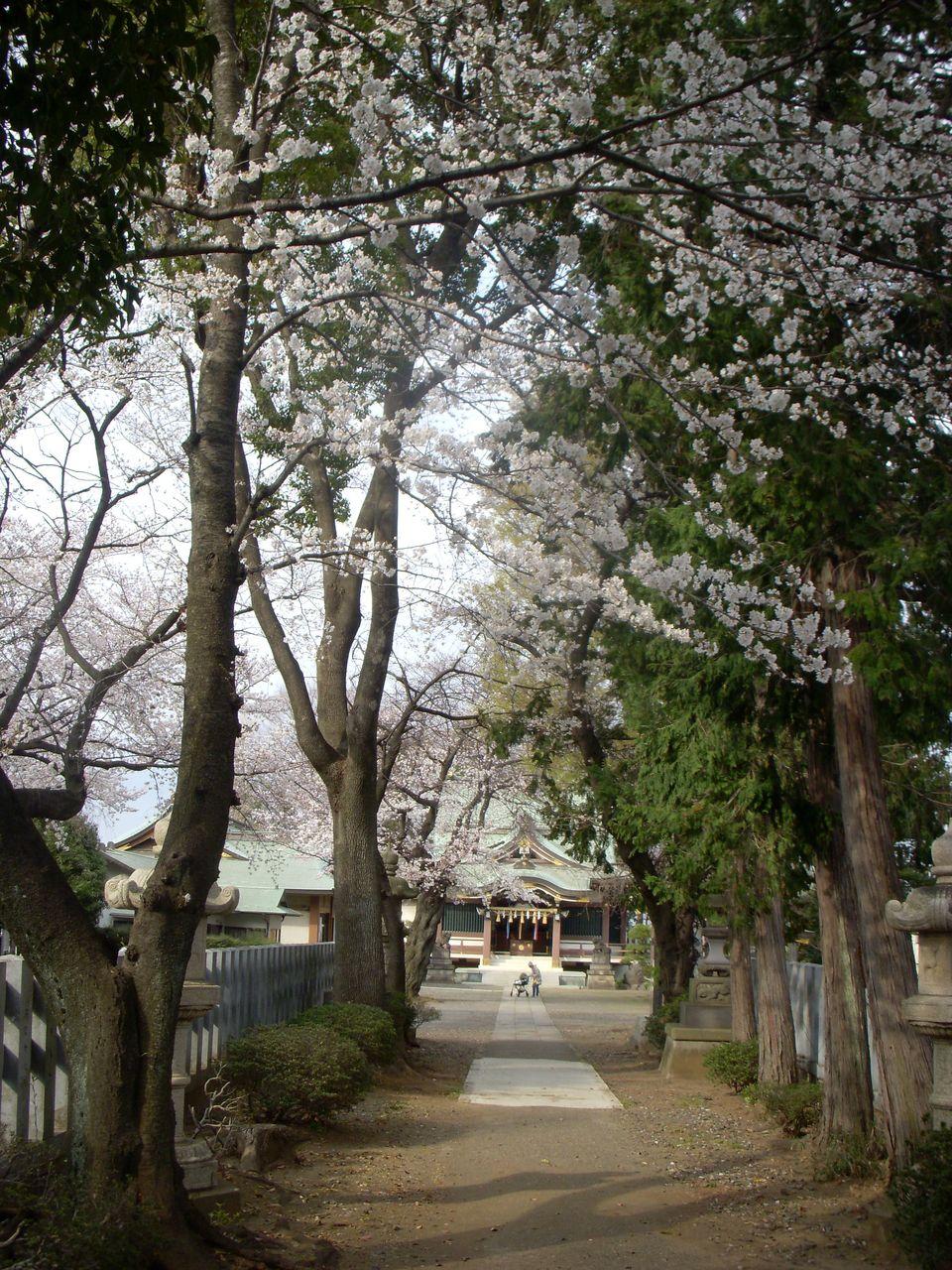 境内 板橋区の史跡に登録されている富士塚や木曽御嶽塚があります。