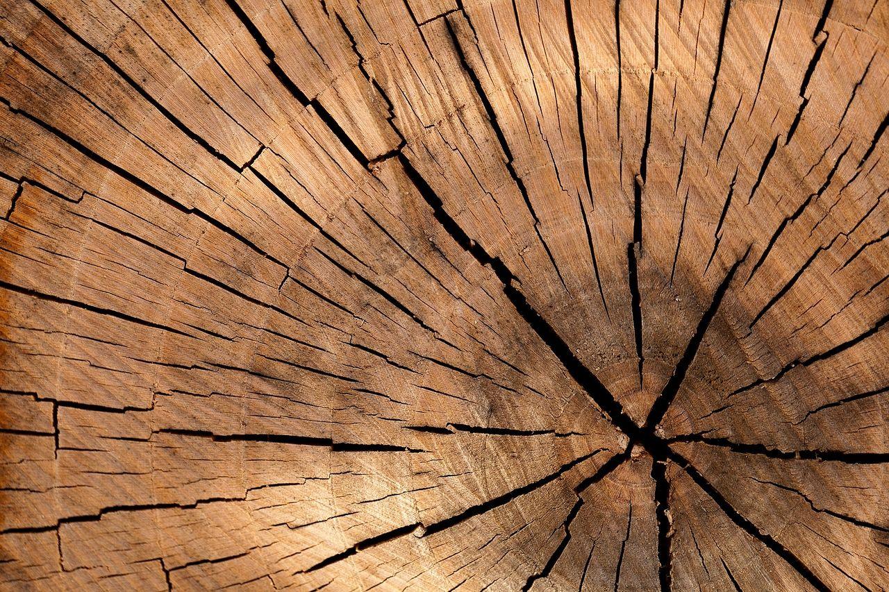 木材についてちょこっと知識を深めてみませんか?