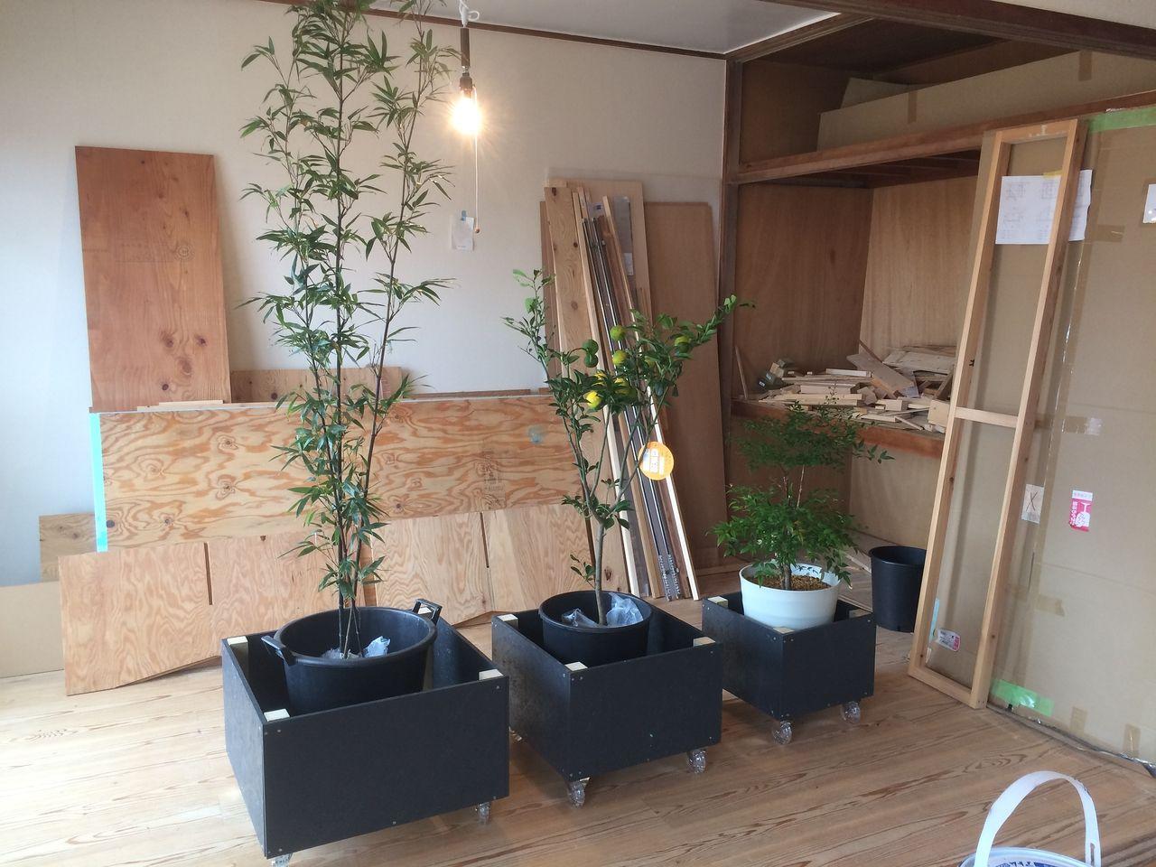 台車と植栽をお店に運ぶ!