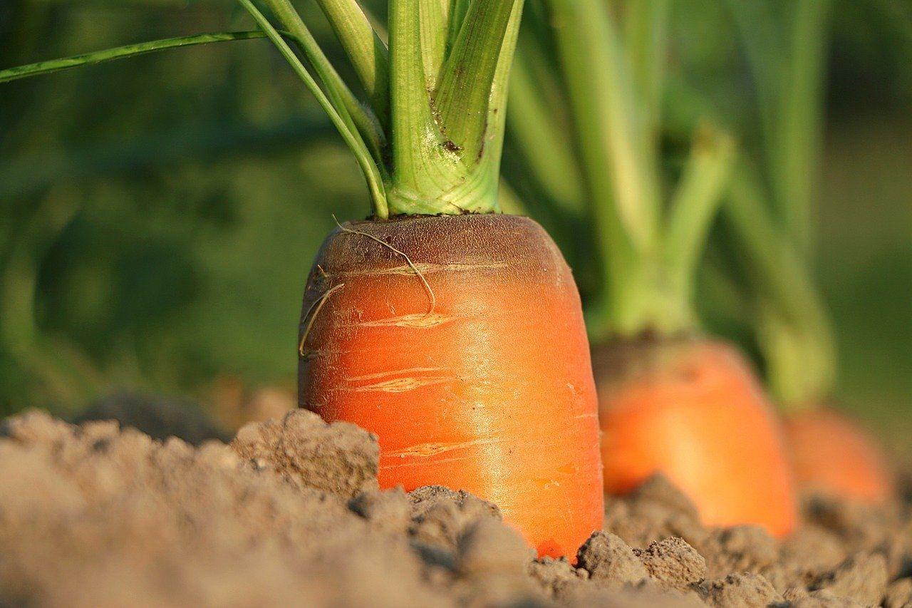 みなさまこんにちは。今年の区民農園利用者募集が始まりますよ。