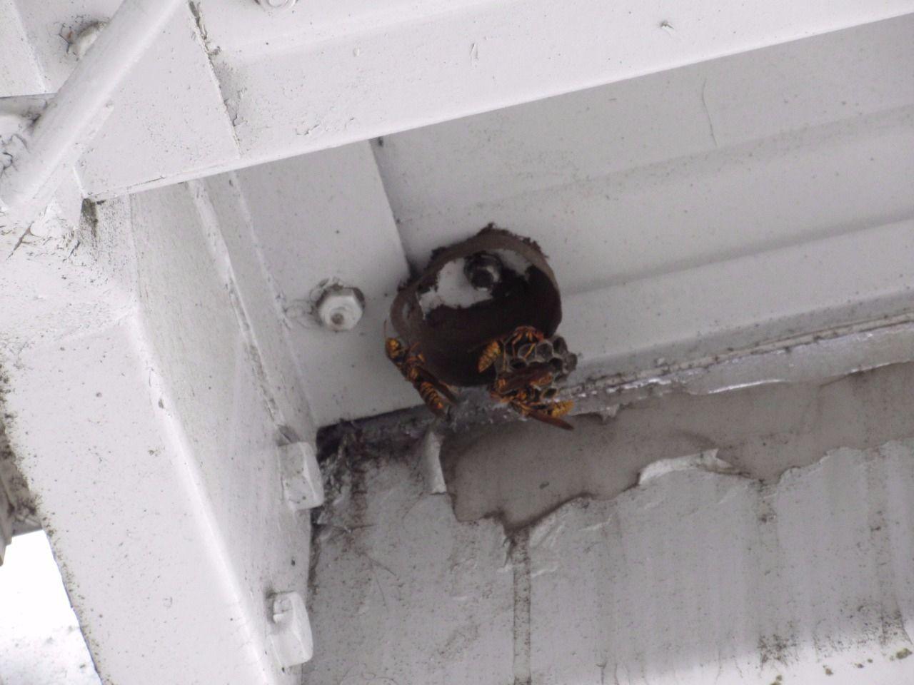 またまた蜂の巣が…