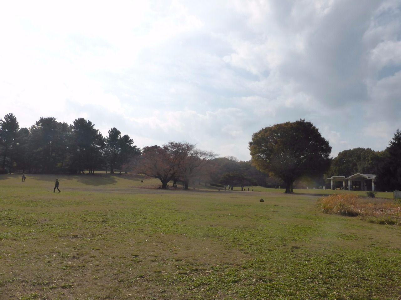 秋は、光が丘公園