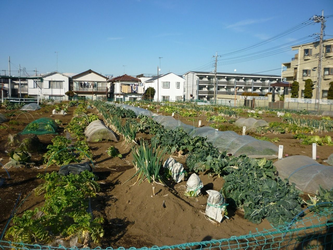 農業体験農園で野菜作り